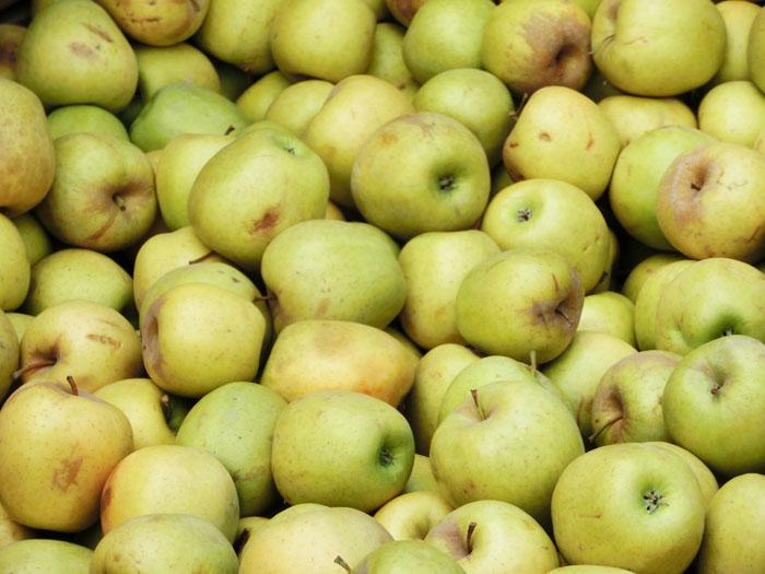 Pyrus malus extract – extracto de manzana